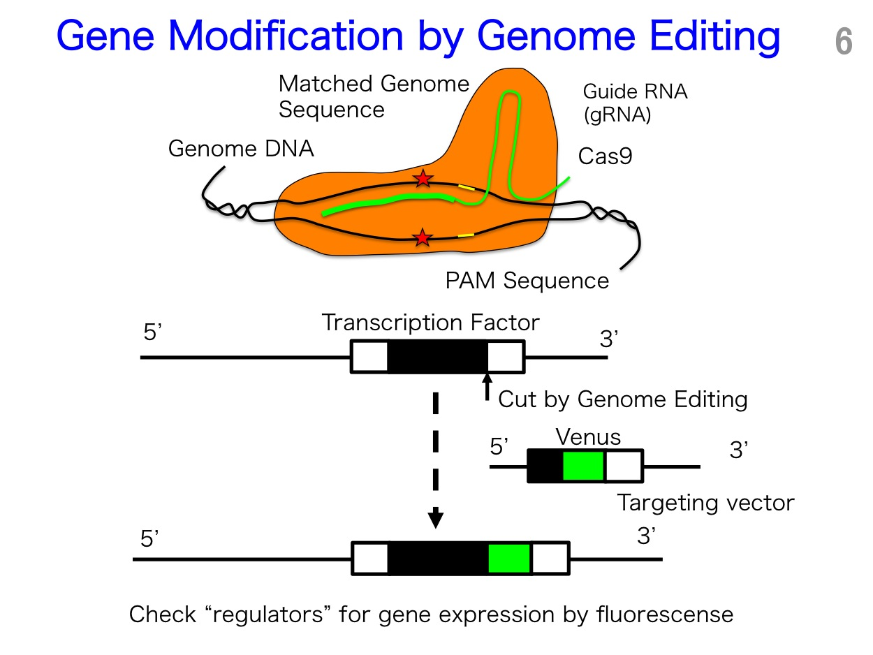 genome2